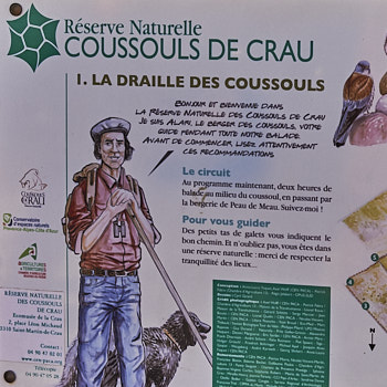 Coussouls of the Crau